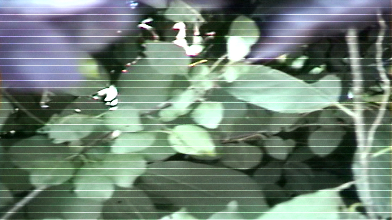Still from processed video